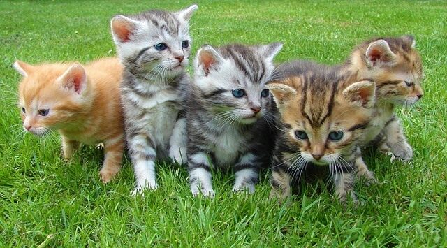 【JAFも警告】日産の#猫バンバンステッカーをシエンタに貼ってみたよ。欲しい人向けデータ配布継続中!
